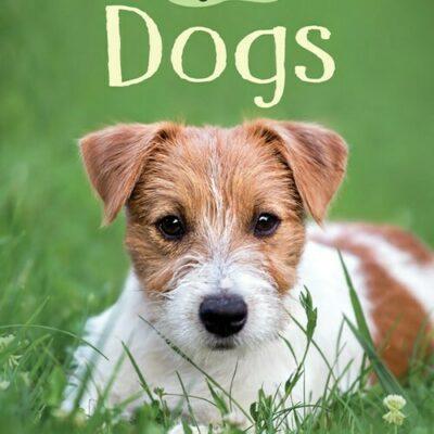 Dogs (Ir) (Beginners)